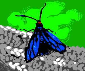 Beautifully drawn butterfly