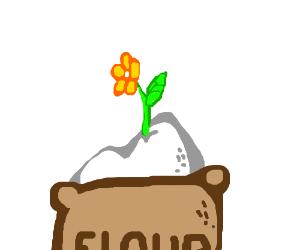 Flower growing in flour