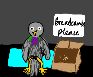 Homeless pigeon begs for breadcrumbs