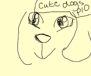 cute dogs p.i.o