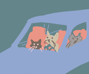 Three kittens go for a ride in a car