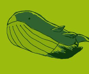 That whale pokemon