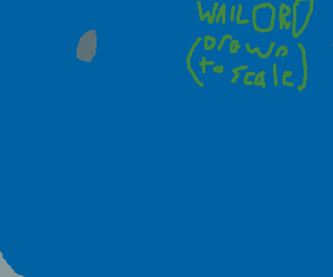 Wailord!!