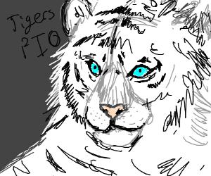 Tigers PIO