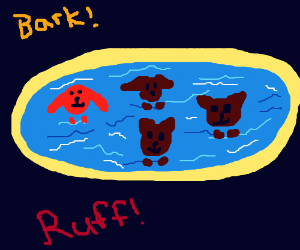 4 Dogs swimming in a pool and one dog is red