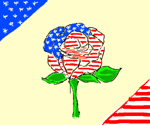 American flag-colored rose