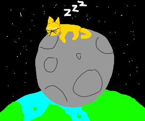 cat sleeps on moon