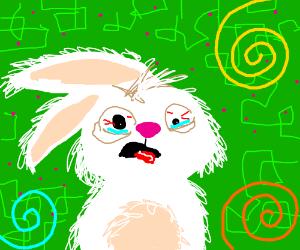 Bunny tripping balls