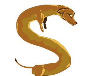 Extra-long dachshund