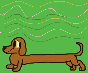 Dog with a super long body