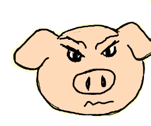 a pig ?!?