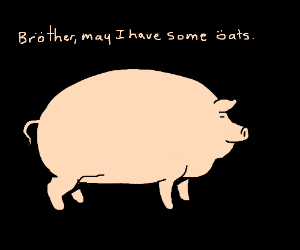 German pig eating oats