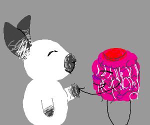 Bunny meets Raspberry