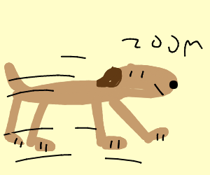 rly fast dog