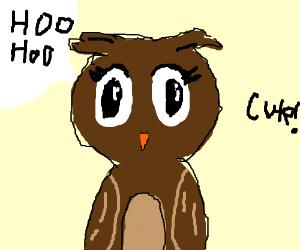 owl is cute