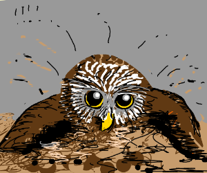 Owl bathing in dirt