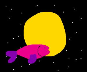 Fish orbit sun