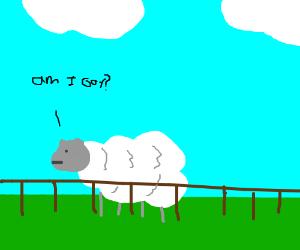 Sheep ponders if he's gay
