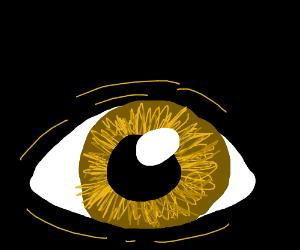 Yellow eye closeup