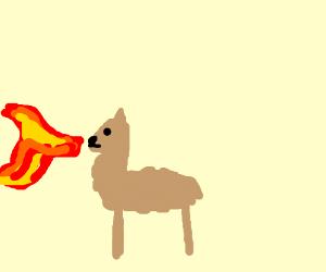 a llama spitting fire