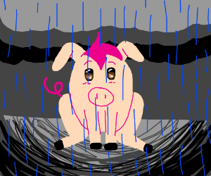 pig with hair in rain