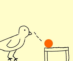Bird stares at orange ball