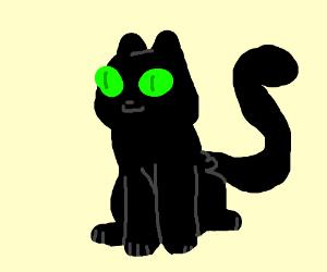 chat noir cat (nonhuman)