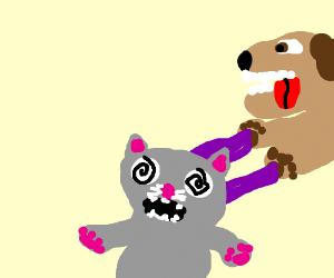 Dog possesses cat