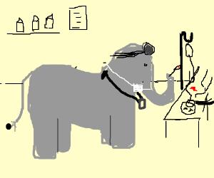 elephant in ER