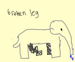 broken leg elephant loves red bull