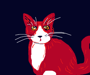 A red-and-white tuxedo cat