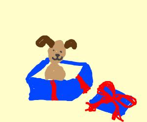 puppy present