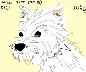 draw your pet(s) PIO