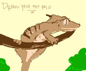 I Haz a Basset Hound (Draw Your Pet P.I.O)