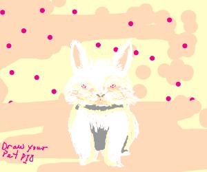 Draw Your Pet P.I.O
