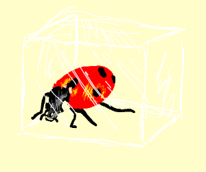 lady bug trapped