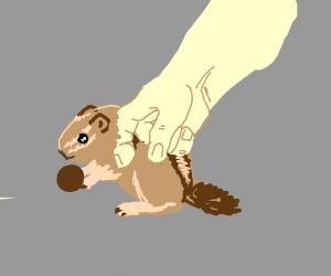 Petting a Chipmunk