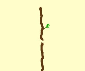 A broken stick