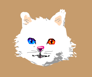 Cat with one blue eye and one red