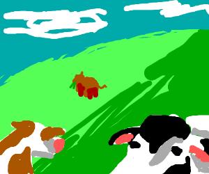 happy lil cows