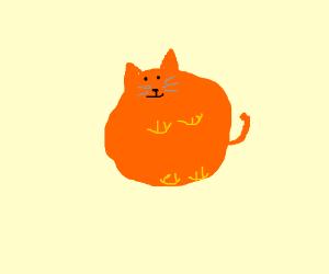 really round cat