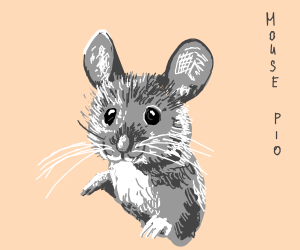Mouse PIO