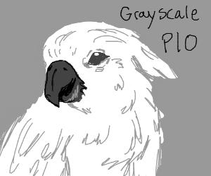 grayscale pio.