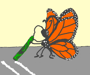 butterfly doing something crazy